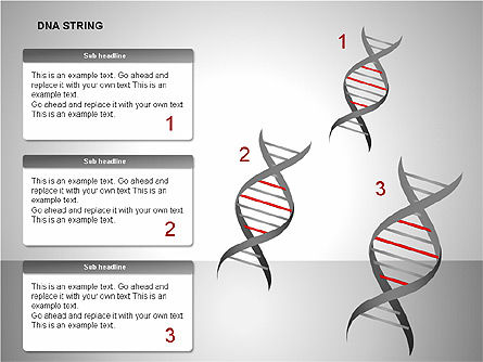 DNA Strand Diagrams Slide 4