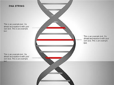DNA Strand Diagrams, Slide 9, 00113, Shapes — PoweredTemplate.com