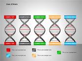 DNA Strand Diagrams#12