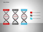 DNA Strand Diagrams#8
