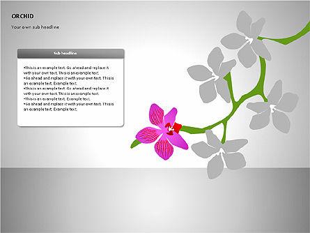 Orchids Shapes, Slide 11, 00117, Stage Diagrams — PoweredTemplate.com
