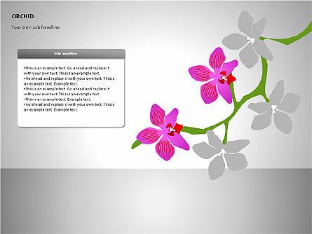 Orchids Shapes, Slide 12, 00117, Stage Diagrams — PoweredTemplate.com