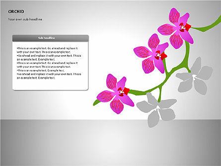 Orchids Shapes, Slide 13, 00117, Stage Diagrams — PoweredTemplate.com