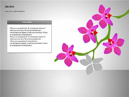 Orchids Shapes, Slide 14, 00117, Stage Diagrams — PoweredTemplate.com