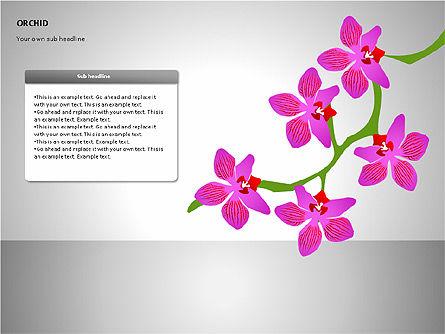 Orchids Shapes, Slide 15, 00117, Stage Diagrams — PoweredTemplate.com