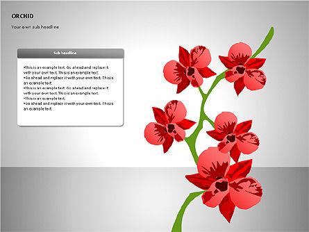 Orchids Shapes, Slide 6, 00117, Stage Diagrams — PoweredTemplate.com