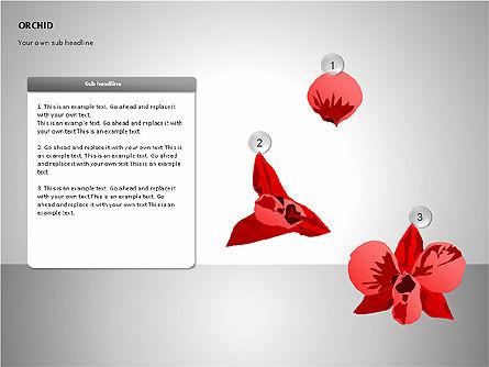 Orchids Shapes, Slide 8, 00117, Stage Diagrams — PoweredTemplate.com
