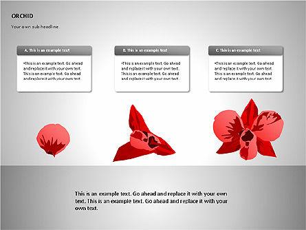Orchids Shapes, Slide 9, 00117, Stage Diagrams — PoweredTemplate.com