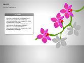 Orchids Shapes#13