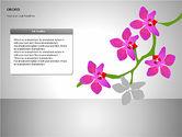Orchids Shapes#14