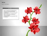Orchids Shapes#6