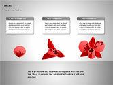 Orchids Shapes#9