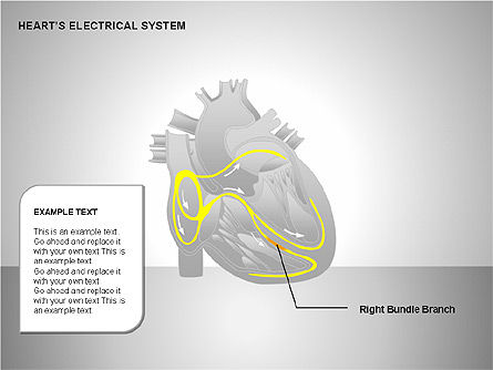 Free Heart's Electrical System, Slide 10, 00146, Medical Diagrams and Charts — PoweredTemplate.com