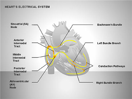 Free Heart's Electrical System, Slide 11, 00146, Medical Diagrams and Charts — PoweredTemplate.com