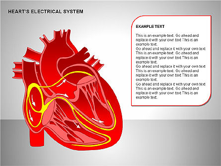 Free Heart's Electrical System, Slide 12, 00146, Medical Diagrams and Charts — PoweredTemplate.com
