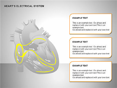 Free Heart's Electrical System, Slide 13, 00146, Medical Diagrams and Charts — PoweredTemplate.com