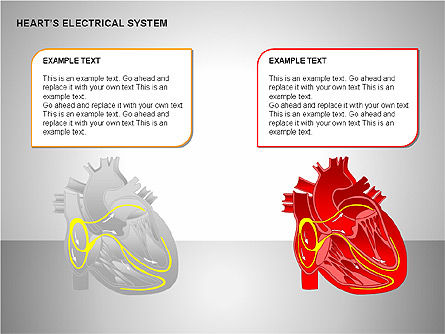 Free Heart's Electrical System, Slide 15, 00146, Medical Diagrams and Charts — PoweredTemplate.com