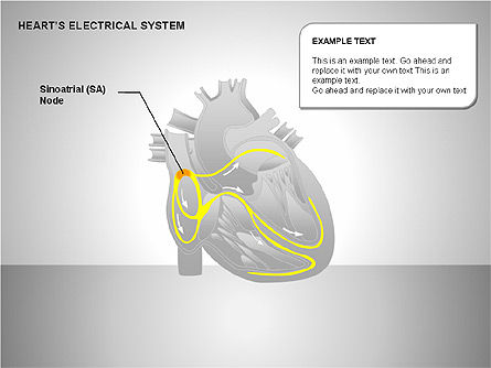 Free Heart's Electrical System, Slide 2, 00146, Medical Diagrams and Charts — PoweredTemplate.com