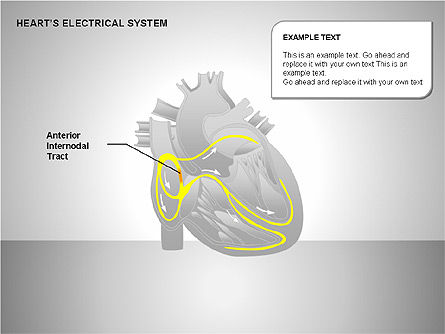 Free Heart's Electrical System, Slide 3, 00146, Medical Diagrams and Charts — PoweredTemplate.com