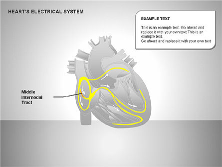 Free Heart's Electrical System, Slide 4, 00146, Medical Diagrams and Charts — PoweredTemplate.com