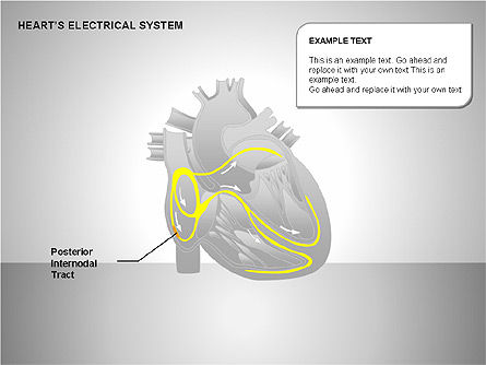 Free Heart's Electrical System, Slide 5, 00146, Medical Diagrams and Charts — PoweredTemplate.com