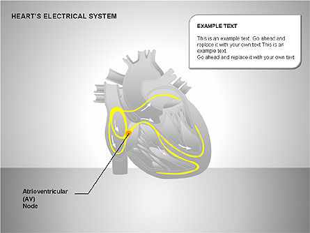 Free Heart's Electrical System, Slide 6, 00146, Medical Diagrams and Charts — PoweredTemplate.com