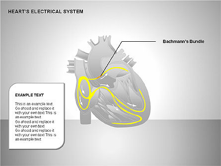 Free Heart's Electrical System, Slide 7, 00146, Medical Diagrams and Charts — PoweredTemplate.com