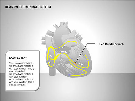 Free Heart's Electrical System, Slide 8, 00146, Medical Diagrams and Charts — PoweredTemplate.com