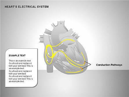 Free Heart's Electrical System, Slide 9, 00146, Medical Diagrams and Charts — PoweredTemplate.com