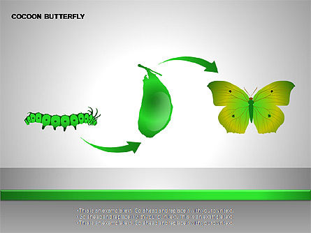 Cocoon Butterfly Diagram , 00177, Stage Diagrams — PoweredTemplate.com