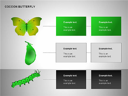 Cocoon Butterfly Diagram , Slide 13, 00177, Stage Diagrams — PoweredTemplate.com