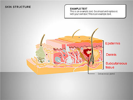 Skin Structure Diagrams, Slide 11, 00210, Medical Diagrams and Charts — PoweredTemplate.com