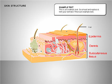 Skin Structure Diagrams, Slide 12, 00210, Medical Diagrams and Charts — PoweredTemplate.com