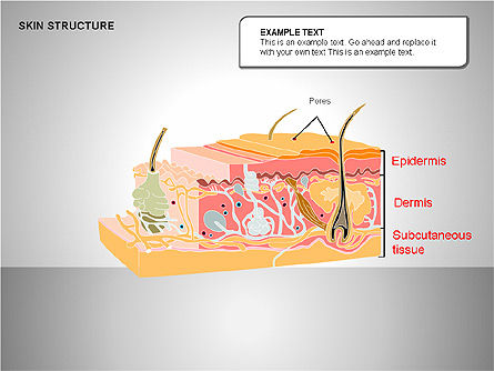Skin Structure Diagrams, Slide 13, 00210, Medical Diagrams and Charts — PoweredTemplate.com