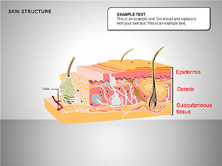 Skin Structure Diagrams, Slide 5, 00210, Medical Diagrams and Charts — PoweredTemplate.com