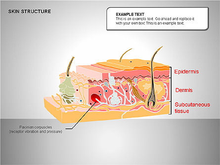 Skin Structure Diagrams, Slide 7, 00210, Medical Diagrams and Charts — PoweredTemplate.com