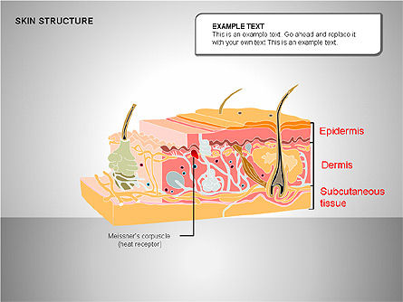 Skin Structure Diagrams, Slide 8, 00210, Medical Diagrams and Charts — PoweredTemplate.com