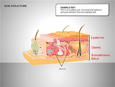 Skin Structure Diagrams, Slide 9, 00210, Medical Diagrams and Charts — PoweredTemplate.com