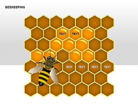 Matrix Charts: Bee Diagrams #00239