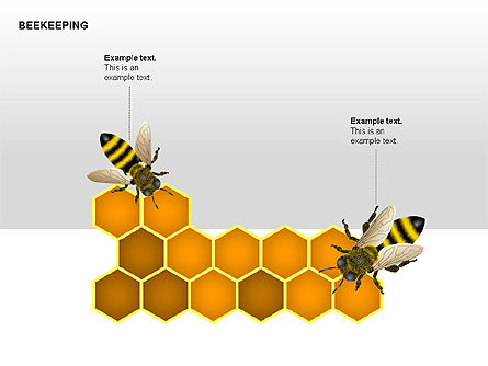 Bee Diagrams, Slide 7, 00239, Matrix Charts — PoweredTemplate.com
