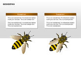 Bee Diagrams#15