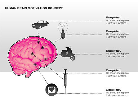 Human Brain Motivation Diagrams, Slide 12, 00269, Organizational Charts — PoweredTemplate.com