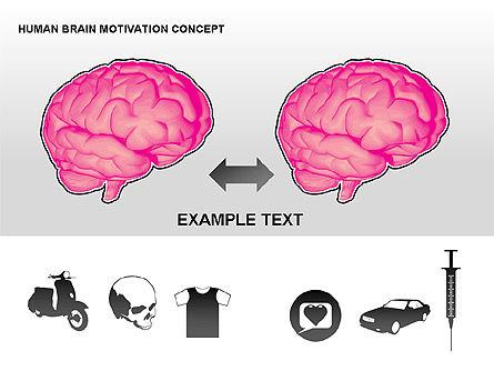 Human Brain Motivation Diagrams, Slide 15, 00269, Organizational Charts — PoweredTemplate.com