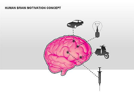 Human Brain Motivation Diagrams, Slide 5, 00269, Organizational Charts — PoweredTemplate.com