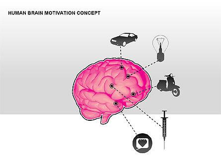 Human Brain Motivation Diagrams, Slide 6, 00269, Organizational Charts — PoweredTemplate.com