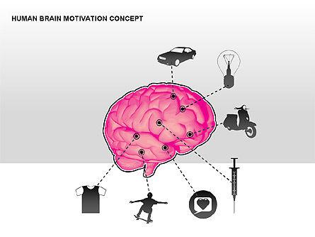 Human Brain Motivation Diagrams, Slide 8, 00269, Organizational Charts — PoweredTemplate.com