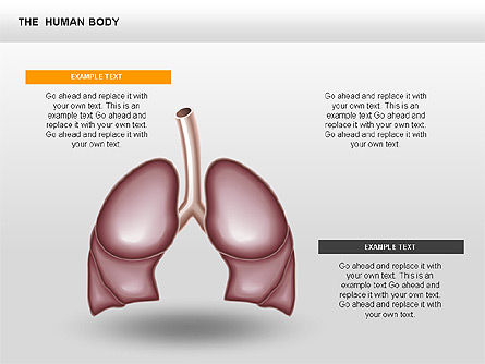 The Human Internal, Slide 2, 00351, Medical Diagrams and Charts — PoweredTemplate.com