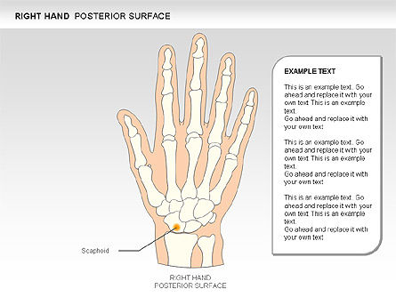 Right Hand Diagram, Slide 10, 00552, Medical Diagrams and Charts — PoweredTemplate.com