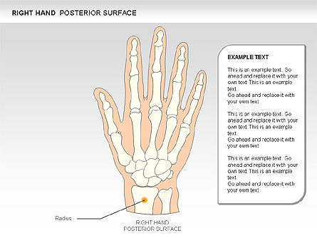 Right Hand Diagram, Slide 11, 00552, Medical Diagrams and Charts — PoweredTemplate.com