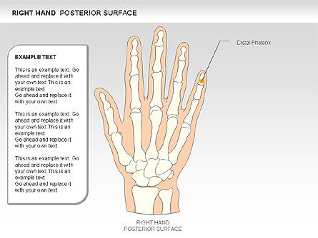 Right Hand Diagram, Slide 12, 00552, Medical Diagrams and Charts — PoweredTemplate.com